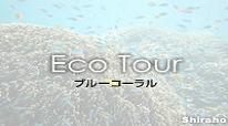 石垣島 ブルーコーラルのクチコミ情報