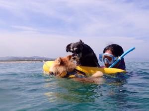 モンちゃんはスイスイ泳ぎ うめは浮き輪でゆったり浮かぶ