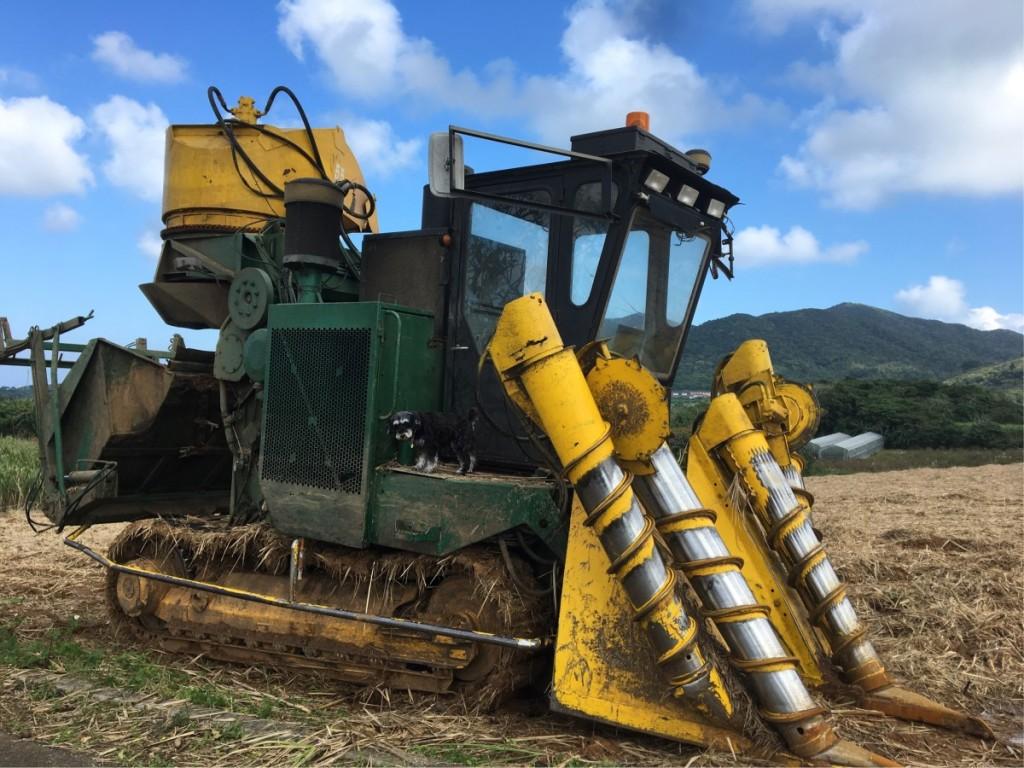 サトウキビを刈り取るハーベスター サトウキビ収穫シーズンです うめちっちゃい(笑)