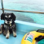 船上のうめ(ブルーコーラル看板犬)