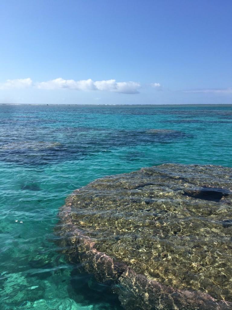 午前の海 でっかいハマサンゴ