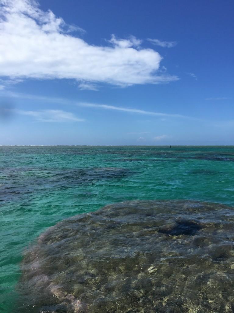 午前の海 ハマサンゴ